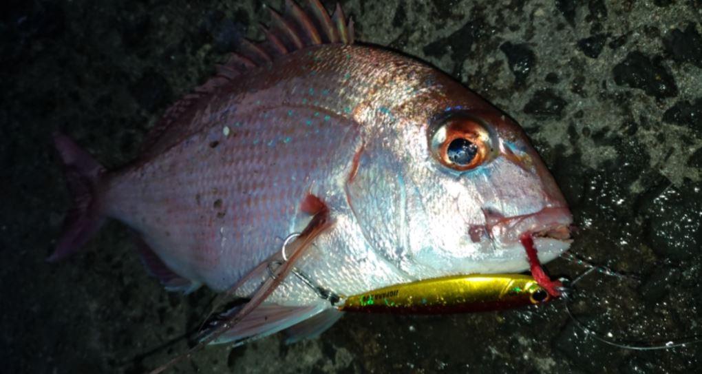 メタルジグ20gで真鯛が釣れるライトショアジギング佐賀11月呼子港