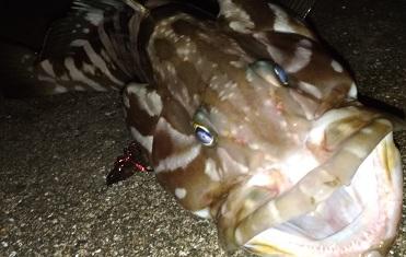 エギングロッドでライトショアジギング!メタルジグでアジも釣れる!