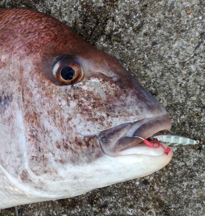 ライトショアジギングで真鯛釣り!メタルジグで鯛が釣れる!平戸の防波堤!