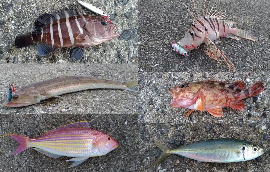 ショアジギング11月末!長崎平戸で8時間!6種目22匹釣れる!
